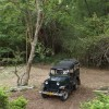 Tiger Jungle Resort - Jungle Jeep Safari